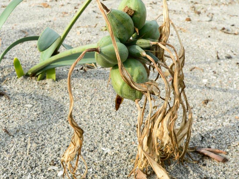 Ecosystems. Coastal sand dunes royalty free stock image