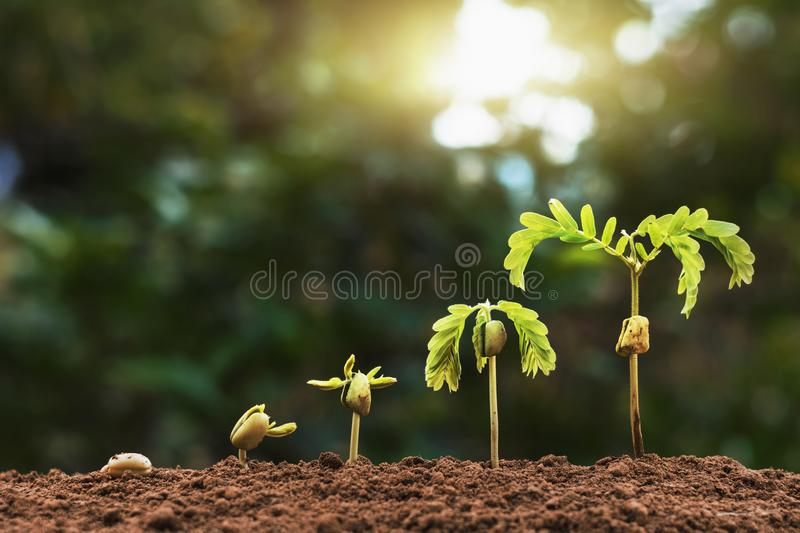 plant seeding growing step with sunlight with vintage tone filter stock photography
