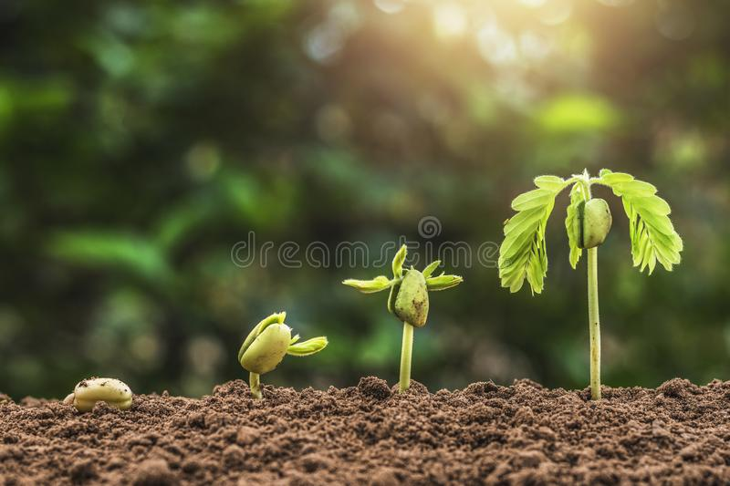 Plant seeding growing step with sunrise with vintage tone. Filter royalty free stock image
