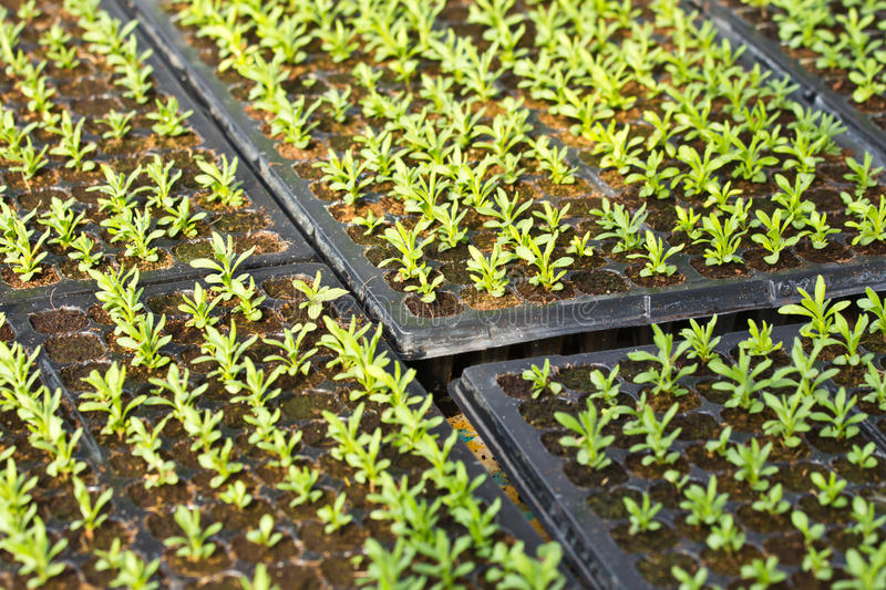 Download Plant seedling stock photo. Image of agriculture, organic - 25487532