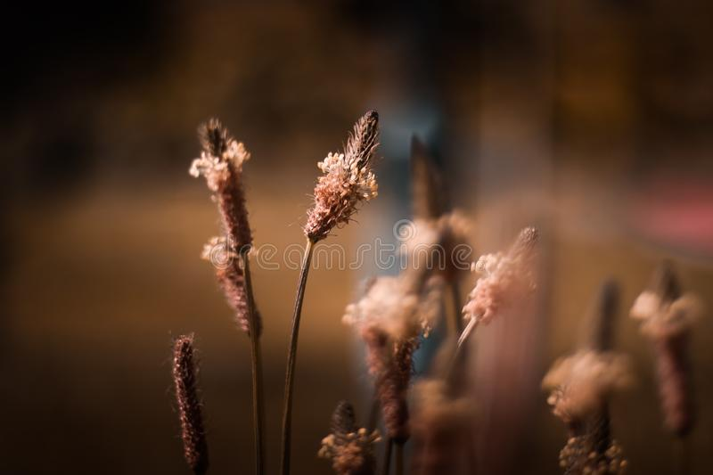 Plant Selective Focus Photography stock photo