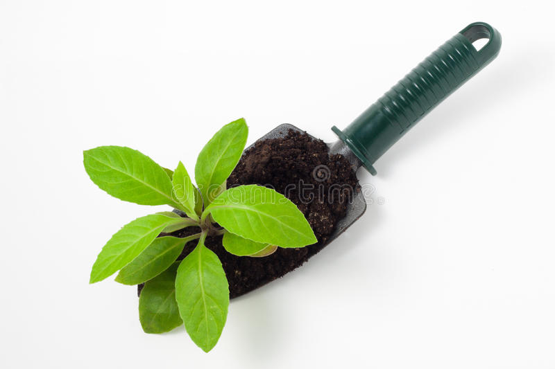 Plant on a Shovel stock image