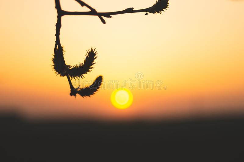 Plant silhouette at golden sunset stock photo