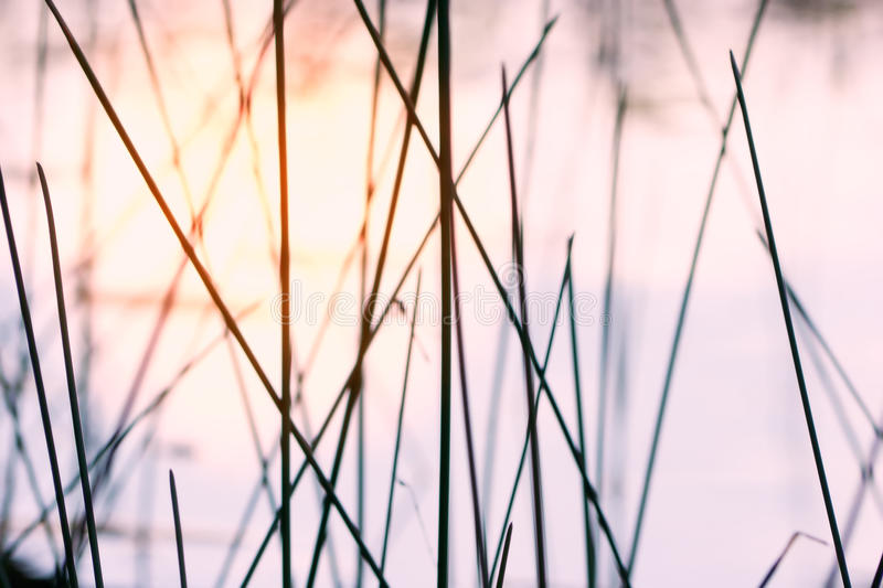 Download Plant silhouettes sky stock image. Image of stems, blurred - 26583523