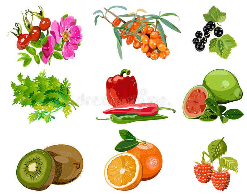 Download Plant sources of vitamin C stock vector. Image of eating - 25906523