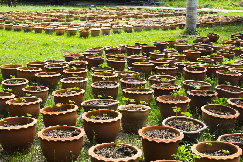 Download Plant species stock image. Image of environment, conservation - 26528647