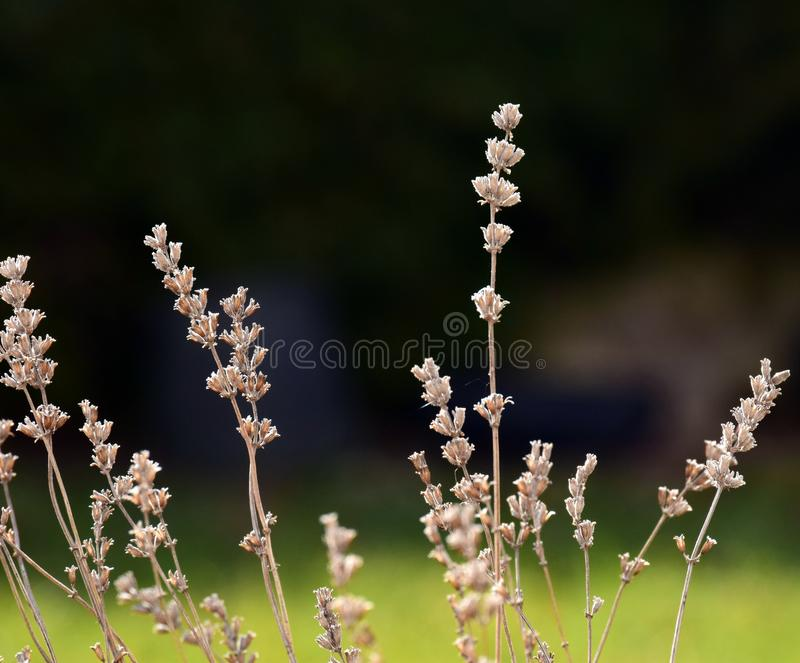 Plant, Spring, Flower, Branch stock image