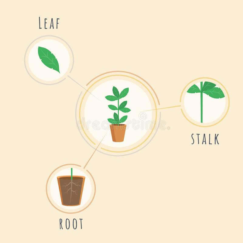 Plant structure vector banner template. Biology lesson equipment, tool, placard explaining root, stalk, leaf elements vector illustration