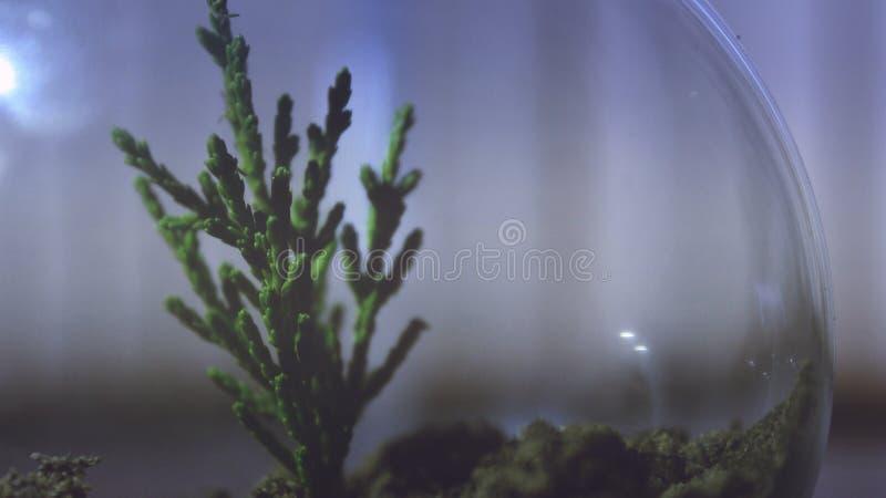 Plant In Terrarium Free Public Domain Cc0 Image