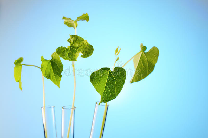 Download Plant In Test Tube Stock Images - Image: 22764454
