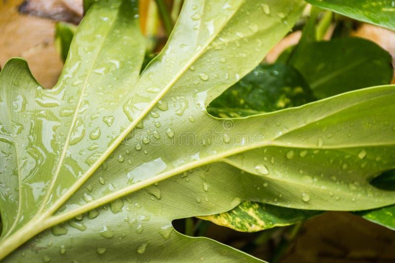 Plant texture stock photo