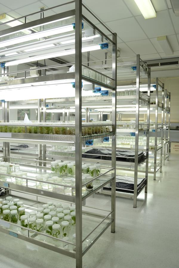 Plant tissue culture stock images