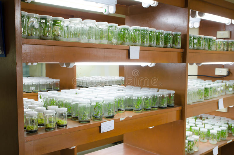 Plant tissue culture stock photo Image of experiment 39985522