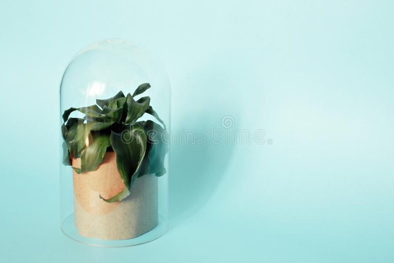 Plant in a transparent flask royalty free stock images
