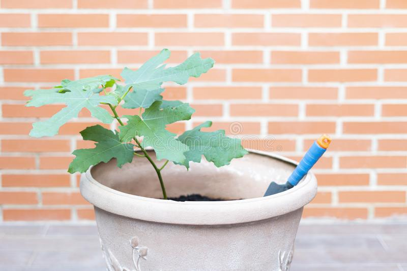 Plant transplanted into a large pot with a small shovel. Outdoor environment with brick background. concept nature stock photography