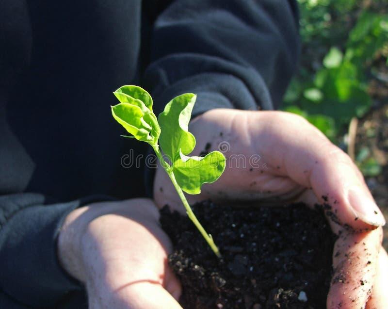Plant a tree royalty free stock photo