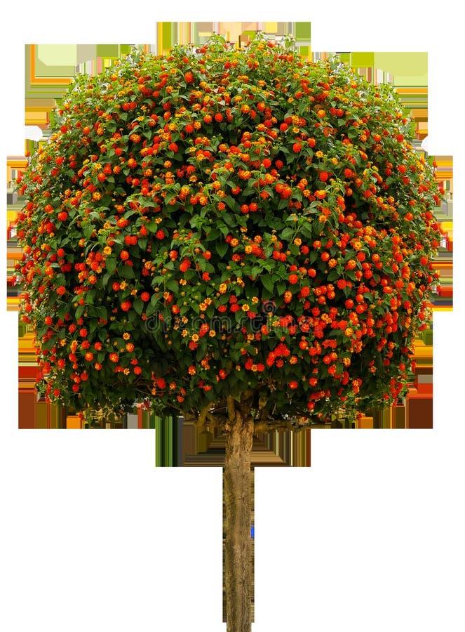 Plant, Tree, Flora, Flower royalty free stock image