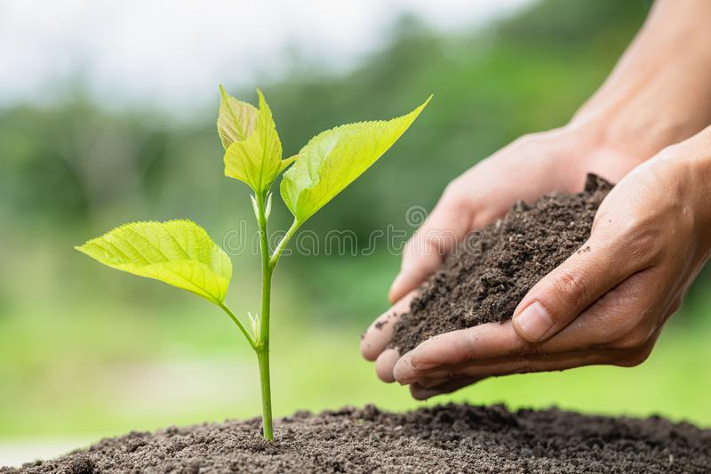Plant a tree. Forest conservation concept, reduce global warming. World Environment Day.  stock images