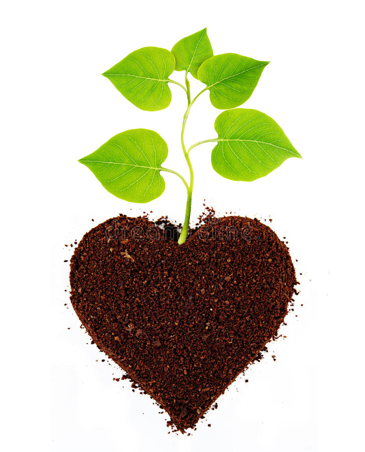 Plant tree in ground stock image