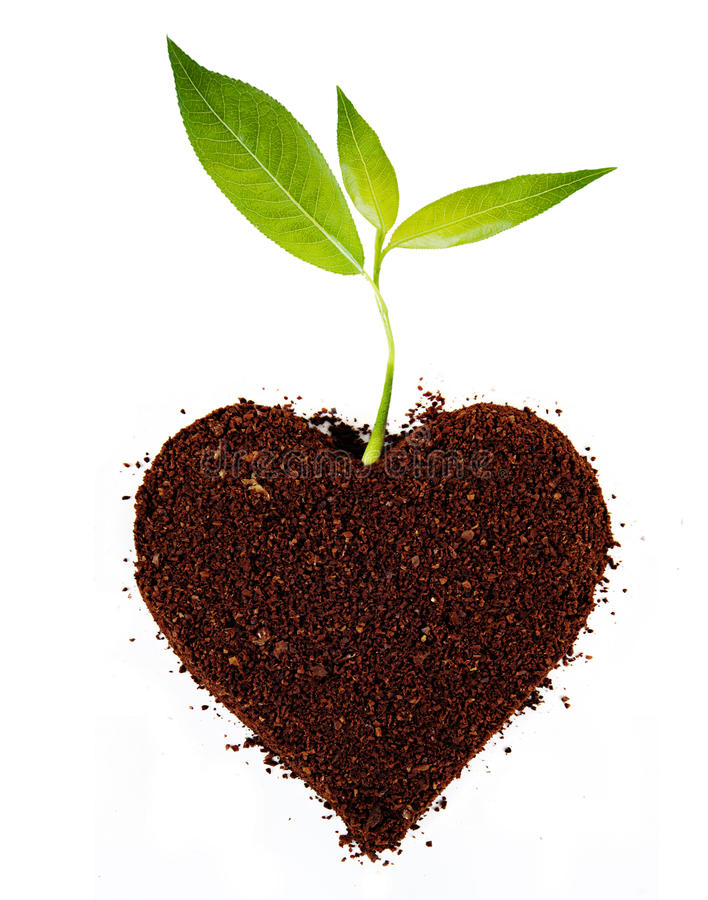 Plant tree in ground royalty free stock photo