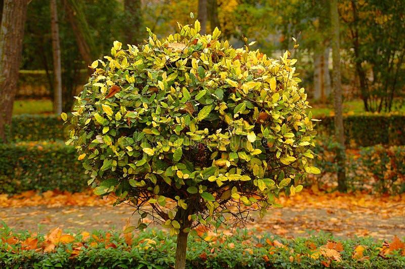 Plant, Tree, Leaf, Flora Free Public Domain Cc0 Image