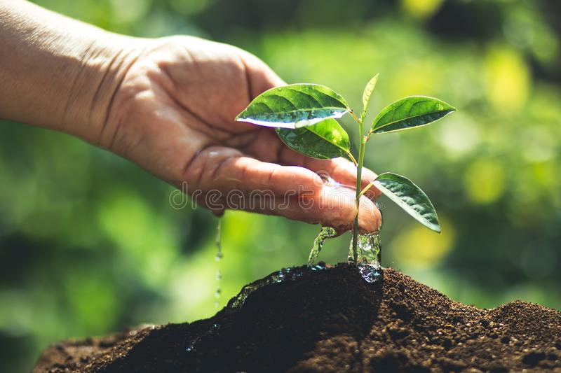 Plant a tree Passion fruit royalty free stock photo