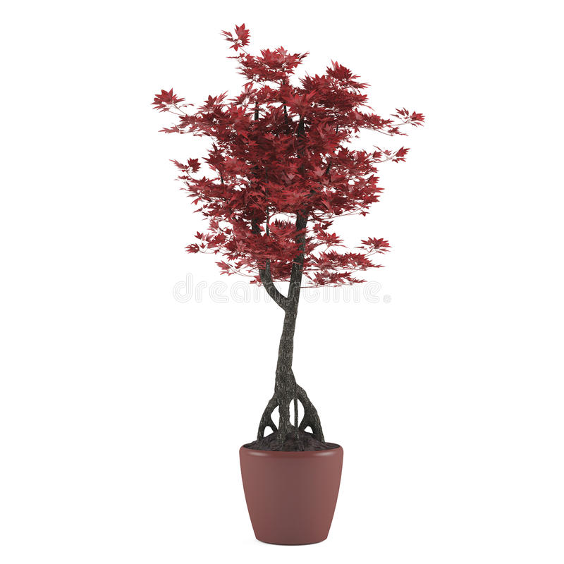 Download Plant tree pot stock illustration. Image of indoor, flower - 36408494
