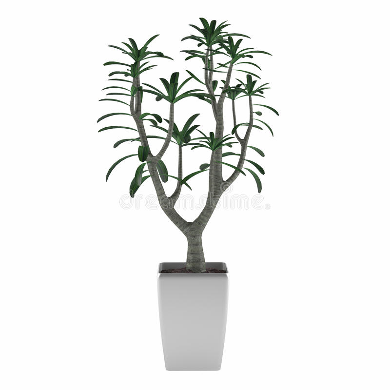 Plant Tree Pot Royalty Free Stock Image