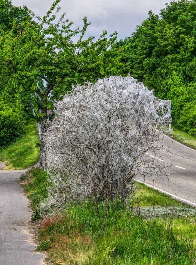 Plant, Tree, Vegetation, Flower stock photography