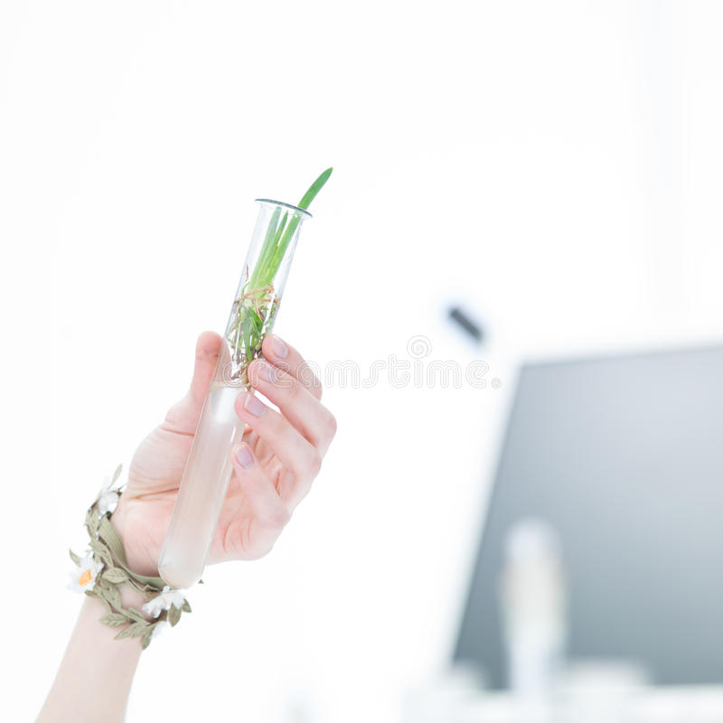 Download Plant in a tube stock photo. Image of holding, warming - 31258014
