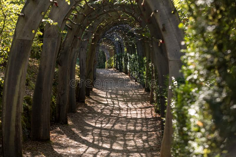 Plant Tunnel in  the gardens of the Jardins de Marqueyssac in the Dordogne region of France.  royalty free stock images