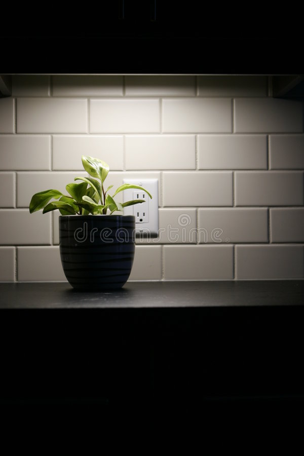 Plant under cabinet lighting stock photo