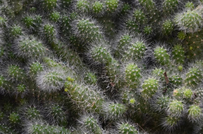 Plant, Vegetation, Cactus, Thorns Spines And Prickles royalty free stock photos