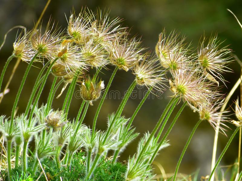Plant, Vegetation, Flora, Grass Family royalty free stock photography