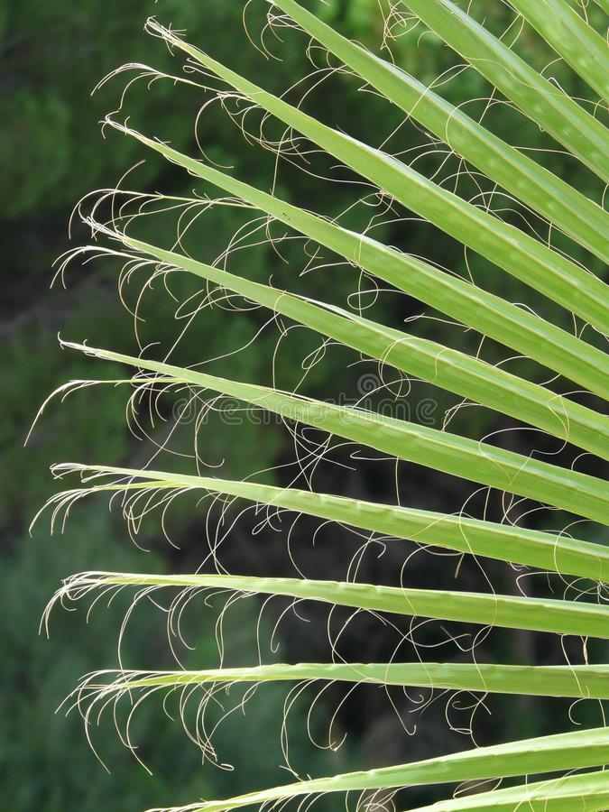 Plant, Vegetation, Leaf, Grass royalty free stock photography