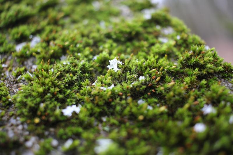 Plant, Vegetation, Non Vascular Land Plant, Moss Free Public Domain Cc0 Image