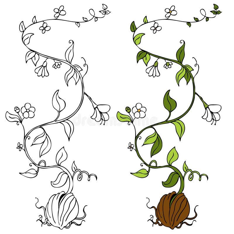 Plant Vine stock vector. Illustration of graphic, sketch ...  Plant Vine stoc...