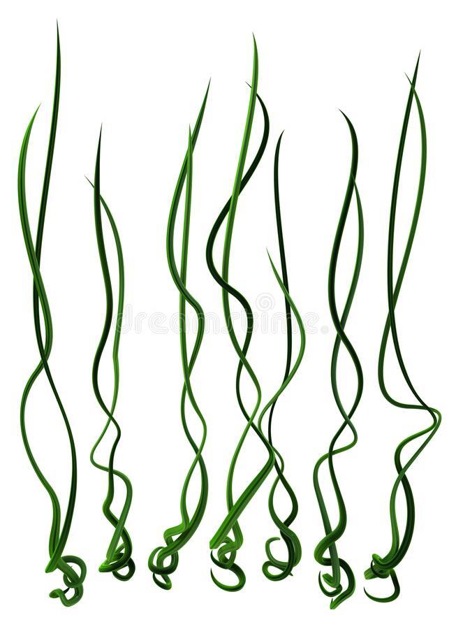 Free Plant Vines Green, Seven Royalty Free Stock Photography - 188001017