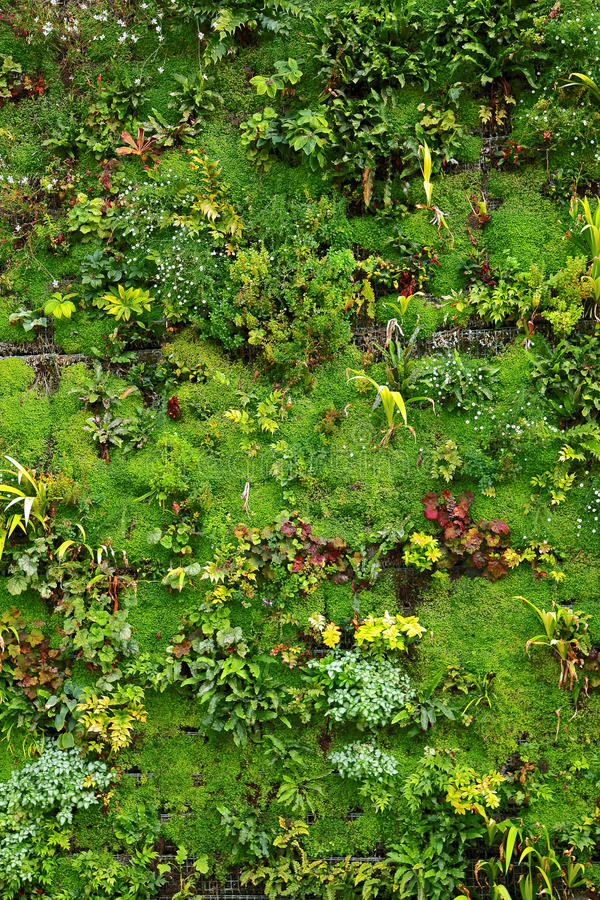 Plant wall stock image