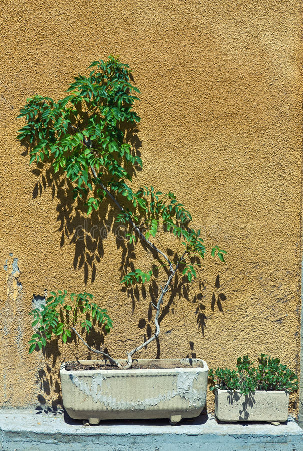 Download Plant and wall stock photo. Image of tree, color, pattern - 26053876