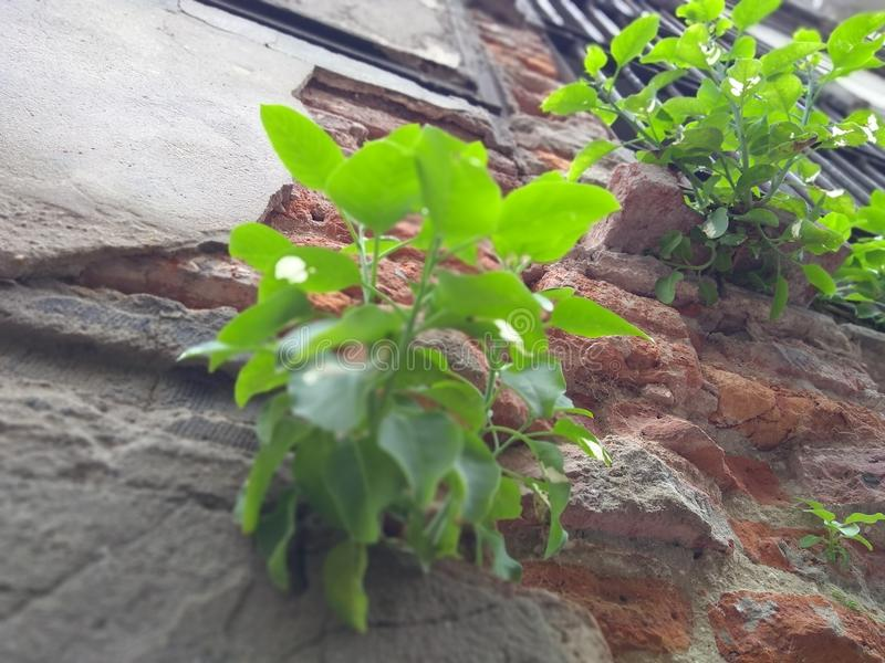 Plant in a wall stock photos