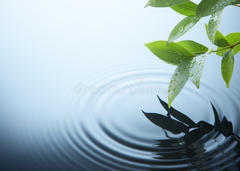 Plant and water stock images