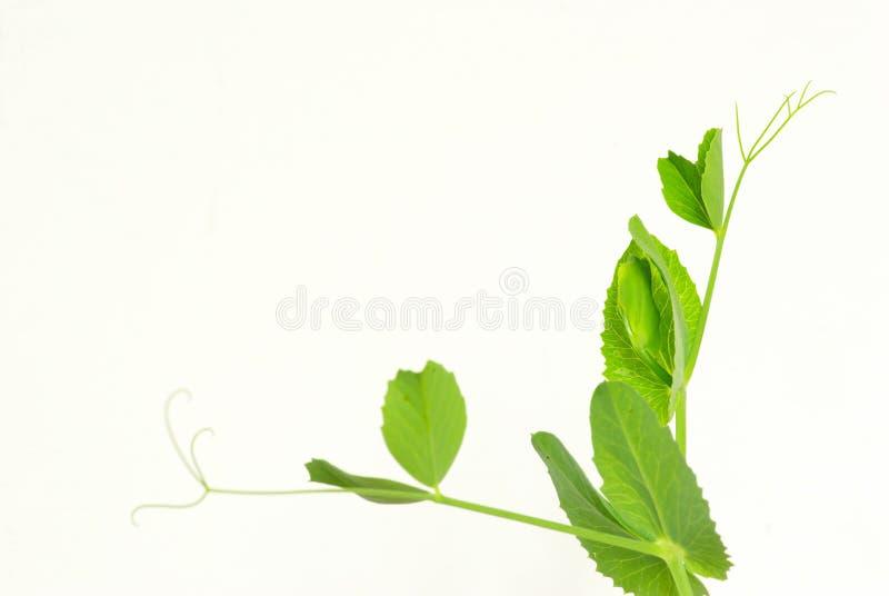 Plant on white stock photo