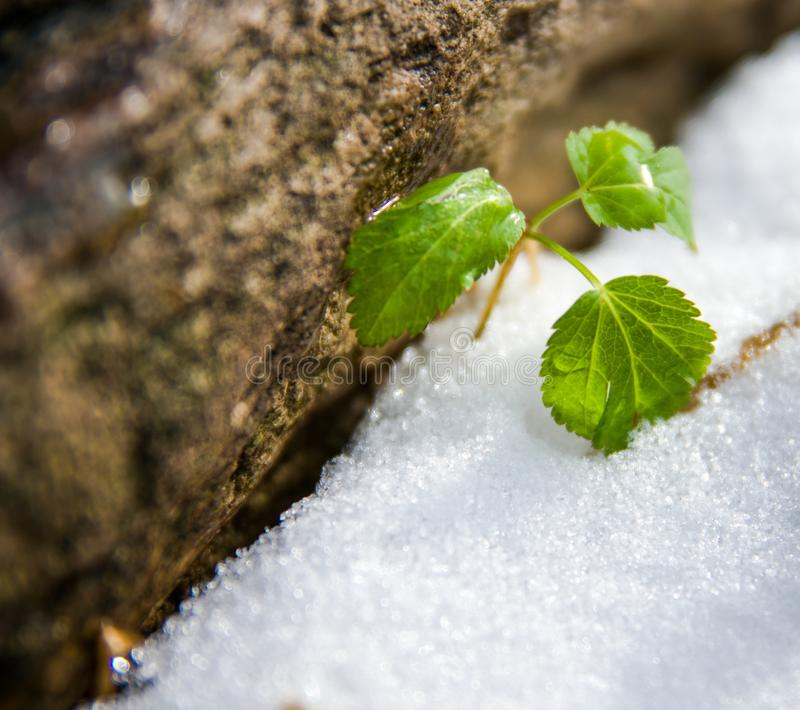 Plant and winter stock image
