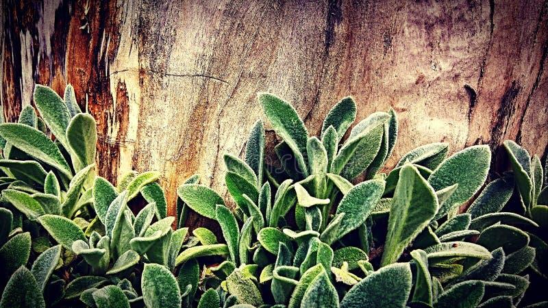 Plant&Wood foto de stock