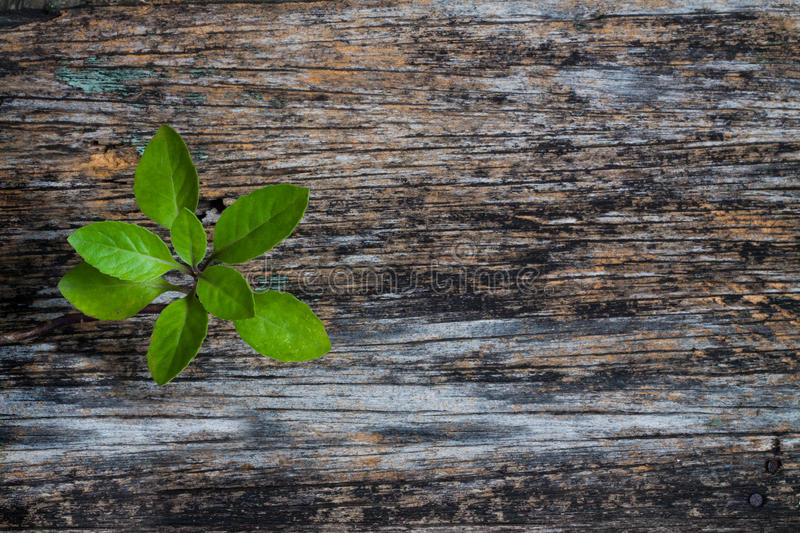 Plant on Wood Background stock photos