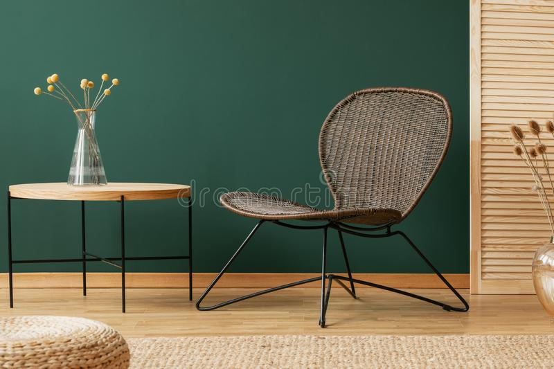 Plant on wooden table next to chair in modern green living room interior with pouf. Real photo stock images