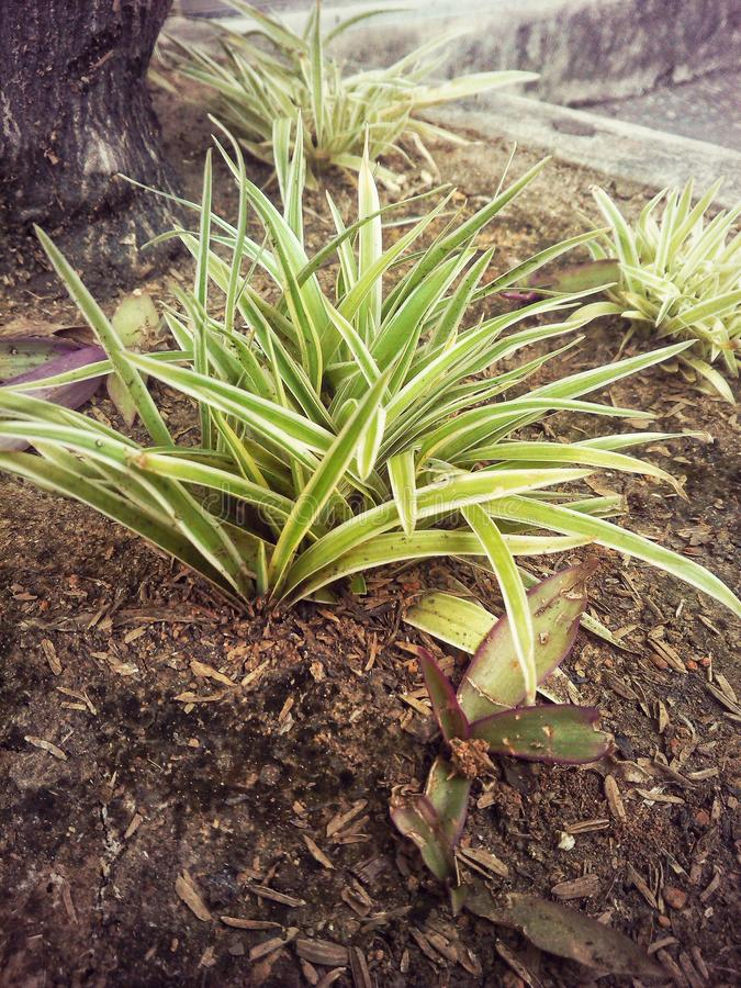 Plant for you royalty free stock photos