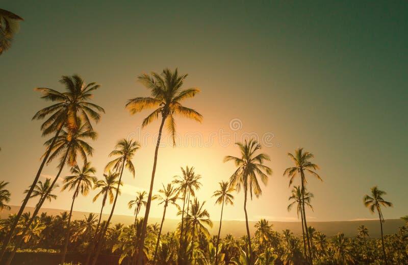 Plantação da palma fotos de stock
