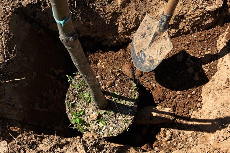 Plantação de árvores imagens de stock royalty free